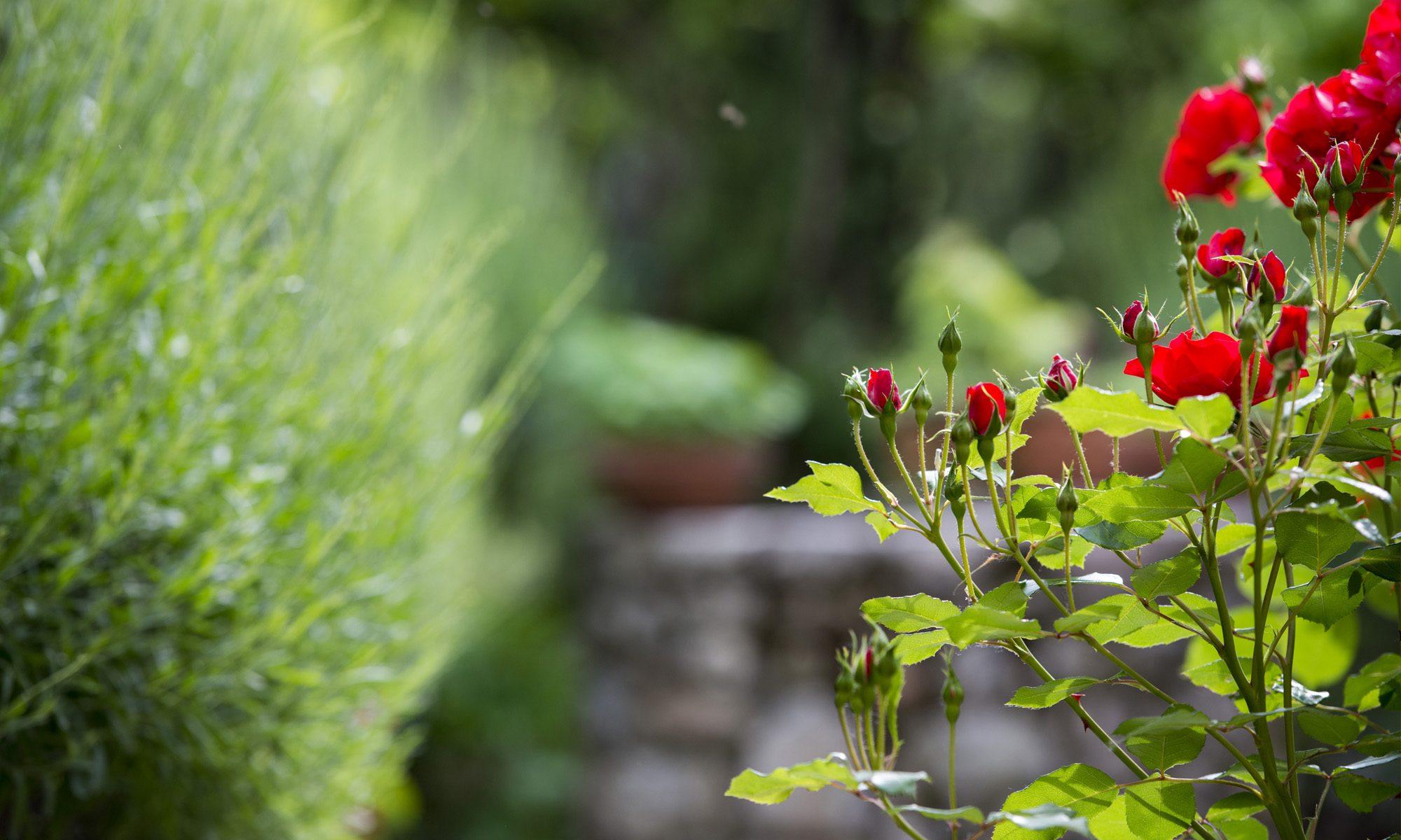 Knof Garten- und Landschaftsbau